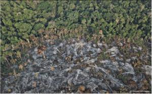 5 COSAS QUE PODÉS PARA SALVAR A LA AMAZONIA 🌳